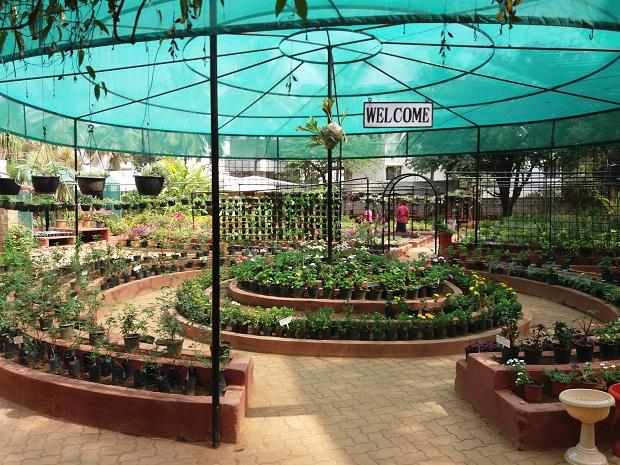 APD Horticulture Garden Green Shade